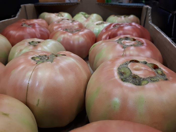 caja tomates rosa